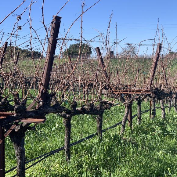 Our Trip to Napa: Part 1